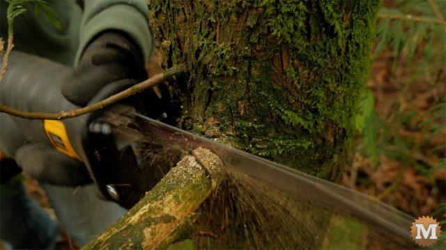 Pruning reciprocating saw trim cedar