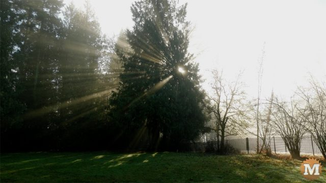 time-lapse video production reasons why content creation god light cedar tree
