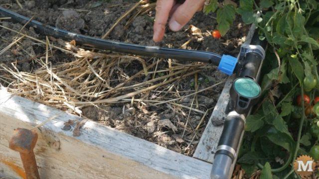 drip tape emitting water drops